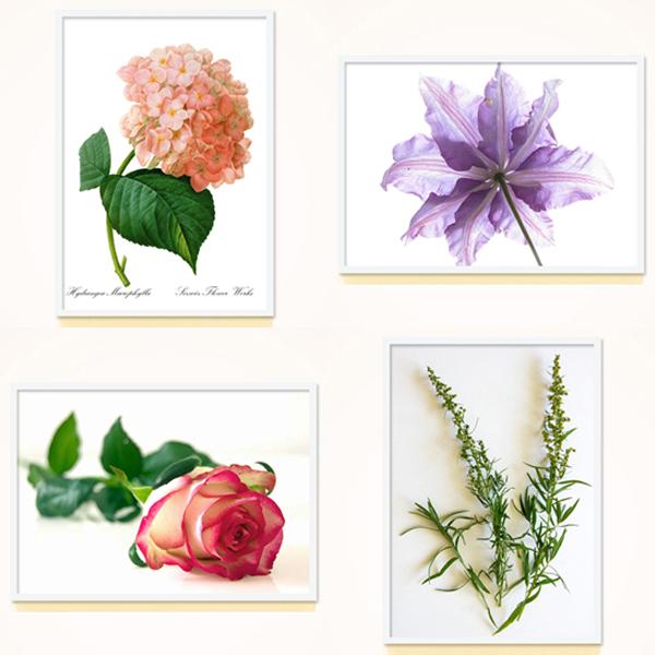 대형 포스터 / FAP02 식물 플라워 포스터 30종 중 택1 A4 A3 A2 A1 추가 액자