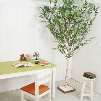자작나무 [인조목]