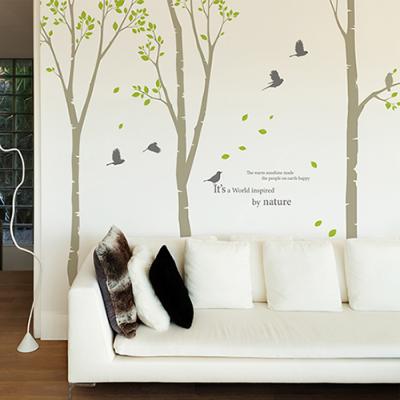 자작나무 숲3