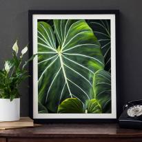 열대식물 잎사귀 그래픽 액자 4