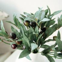 올리브 열매가지