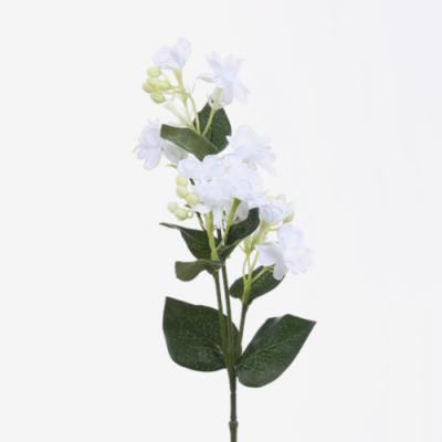 방울꽃가지