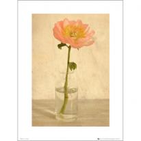 PDH01072 Pink flower bottle (40x50)