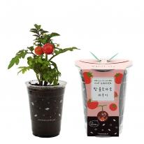 컵안의 작은 정원 컵가든 _ 방울토마토