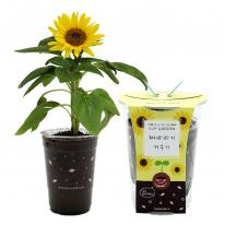 컵안의 작은 정원 컵가든 _ 미니해바라기