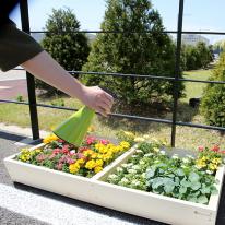 원목 텃밭 화분 1200(대형) 베란다 꽃받침 친환경 정원 꾸미기