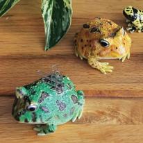 [MAGNET] 뿔 개구리 자석 클립 홀더