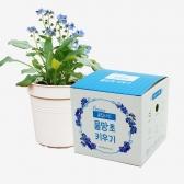 (우리집 정원가꾸기) 꽃집사 - 물망초 키우기