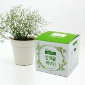 (우리집 정원가꾸기) 꽃집사 - 안개꽃 키우기
