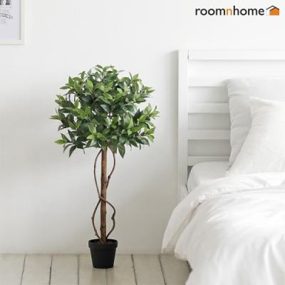 [룸앤홈] 월계수조화나무