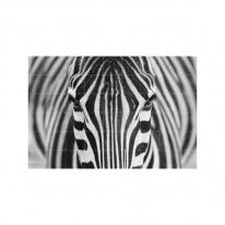 인테리어 월아트 익시 - Zebra