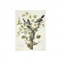 인테리어 월아트 익시 - Loggerhead Shrike