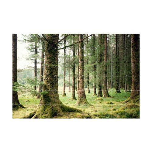 인테리어 월아트 익시 - Forest