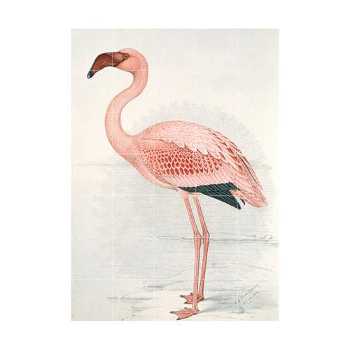 인테리어 월아트 익시 - Flamingo (Finch-Davies)