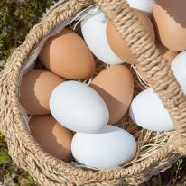 달걀(5개입) FOFDFT(모형)
