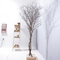 내츄럴라인 소원나무 250cm FREOFT