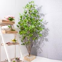 A자형자작나무 300cm FREOFT