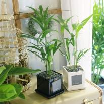 모던 화분 아레카야자 공기정화식물