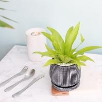 아비스 엔틱 화분 공기정화식물