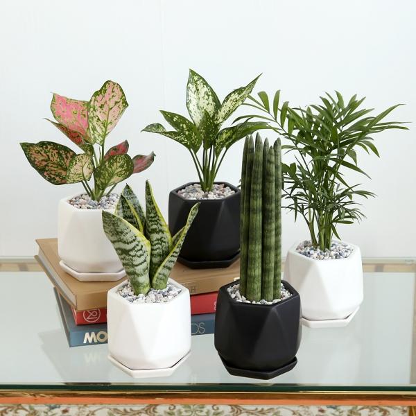 리솜 화분 공기정화식물 8종