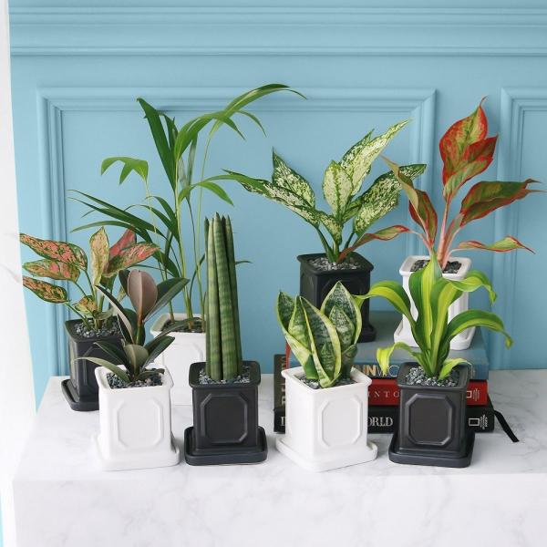 몰딩 화분 모음전 공기정화식물 14종