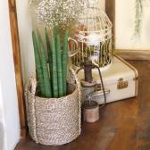 중형 라탄바구니 식물 세트 공기정화식물 13종