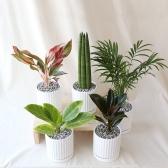 라인 화분 모음 실내공기정화식물 15종