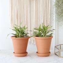 빅토리아 식물+토분세트 공기정화식물