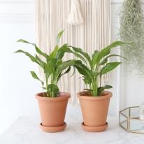 스파트 필름 식물+토분세트 공기정화식물