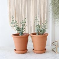 유칼립투스 식물+토분세트 공기정화식물