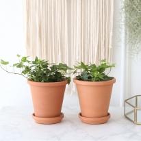 청아이비 식물+토분세트 공기정화식물