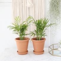 테이블 야자 식물+토분세트 공기정화식물