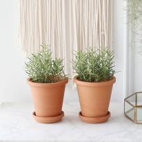 로즈마리 식물+토분세트 공기정화식물
