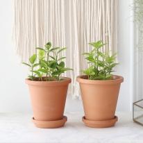금사철 식물+토분세트 공기정화식물