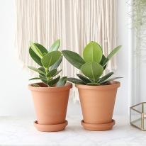 크루시아 식물+토분세트 공기정화식물