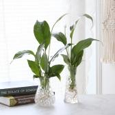 수경재배 스파트필름 공기정화 수중식물