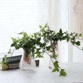 수경재배 청아이비 공기정화 수중식물