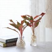 수경재배 오로라 공기정화 수중식물