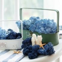 천연이끼 공기정화 식물 블루 스칸디아모스 단품 25g