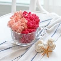 천연이끼 공기정화 식물 핑크 스칸디아모스 단품 25g