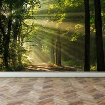 풍경디자인벽지 인테리어뮤럴벽지 숲속의햇빛