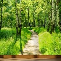 풍경디자인벽지 인테리어뮤럴벽지 자작나무 숲