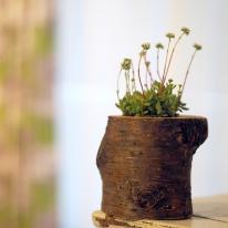 [모포스틀루]진짜나무로 만드는 나만의 생목화분 DIY