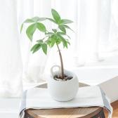 메이크정글 POTTY10 공기정화식물 도자기 수경화분