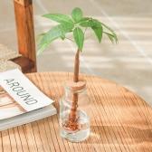 메이크정글 GLASSY NO.4 공기정화식물 유리병 수경화분